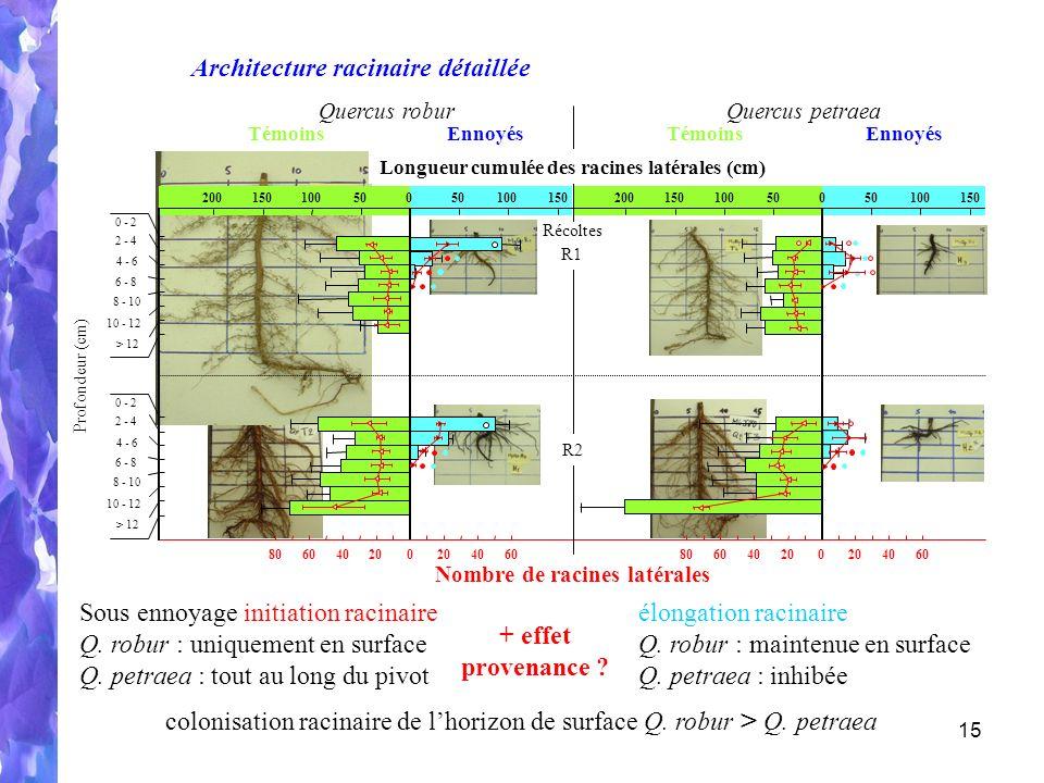 15 806040200604020806040200604020 Nombre de racines latérales Architecture racinaire détaillée colonisation racinaire de lhorizon de surface Q.