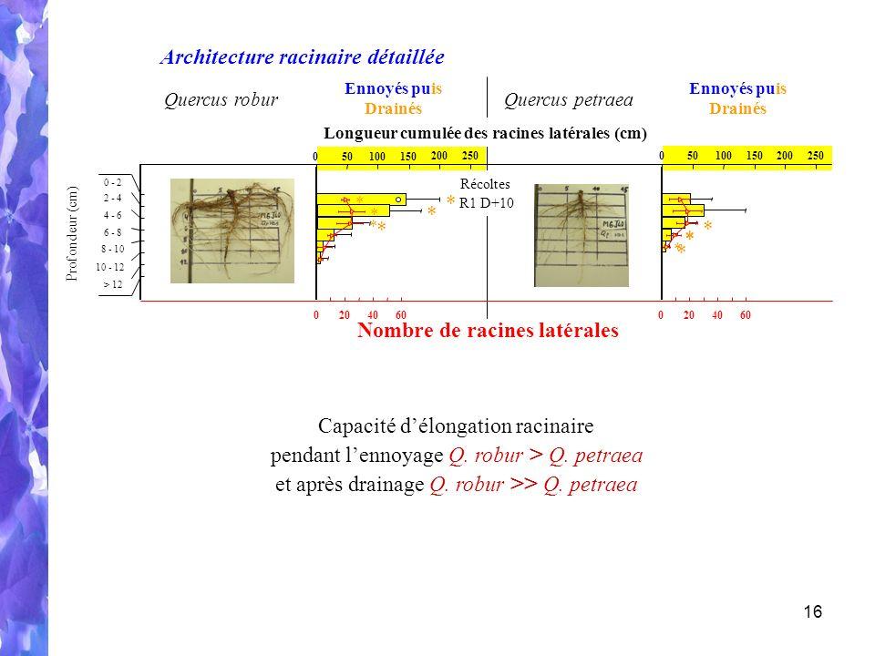 16 Architecture racinaire détaillée R1 D+10 Récoltes Quercus roburQuercus petraea Ennoyés puis Drainés Ennoyés puis Drainés Longueur cumulée des racines latérales (cm) 150050100 250200150050100 250200 * * * * * * * * * * * Profondeur (cm) 10 - 12 0 - 2 2 - 4 4 - 6 6 - 8 8 - 10 > 12 Nombre de racines latérales 06040200604020 Capacité délongation racinaire pendant lennoyage Q.