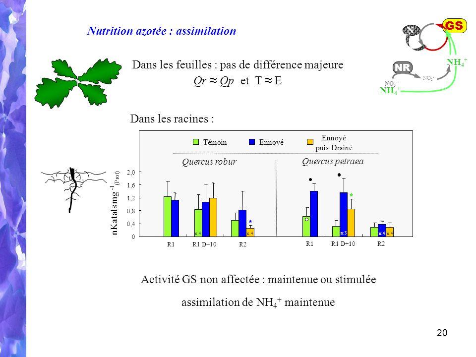 20 R1R1 D+10R2 R1R1 D+10R2 Quercus robur Quercus petraea TémoinEnnoyé puis Drainé 0 0,4 0,8 1,2 1,6 2,0 nKatals mg - 1 (Prot) n:4 n:3 n:4 GS NH 4 + N NO 2 - NR NO 3 - NH 4 + Nutrition azotée : assimilation Dans les feuilles : pas de différence majeure Qr Qp et T E Activité GS non affectée : maintenue ou stimulée assimilation de NH 4 + maintenue Dans les racines :