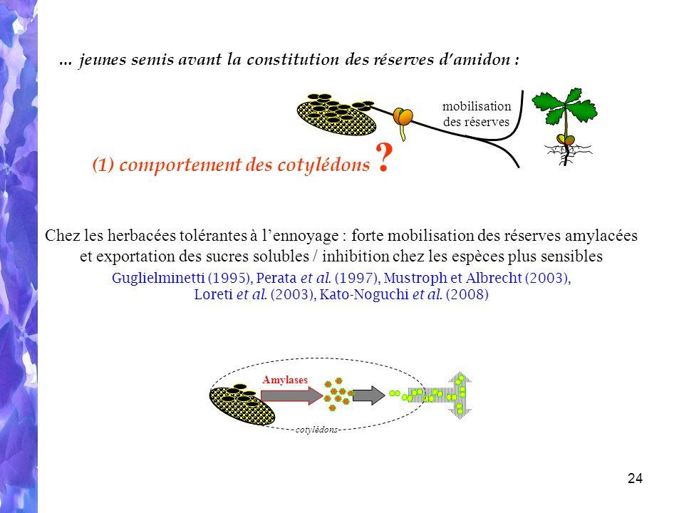 24 Chez les herbacées tolérantes à lennoyage : forte mobilisation des réserves amylacées et exportation des sucres solubles / inhibition chez les espèces plus sensibles Guglielminetti (1995), Perata et al.