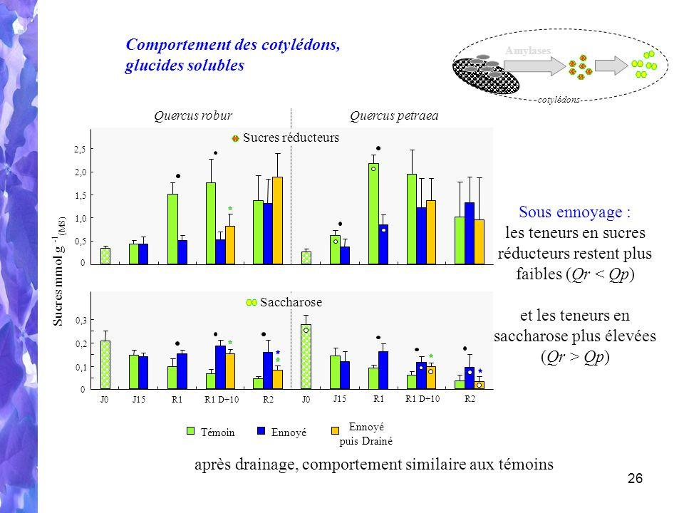 26 Sucres réducteurs 0 1,5 1,0 0,5 2,0 2,5 J15R1R1 D+10R2 J15R1R1 D+10R2 J0 Saccharose 0 0,3 0,1 0,2 Amylases cotylédons Quercus roburQuercus petraea TémoinEnnoyé puis Drainé Sucres mmol g - 1 (MS) Comportement des cotylédons, glucides solubles Sous ennoyage : les teneurs en sucres réducteurs restent plus faibles (Qr < Qp) et les teneurs en saccharose plus élevées (Qr > Qp) après drainage, comportement similaire aux témoins
