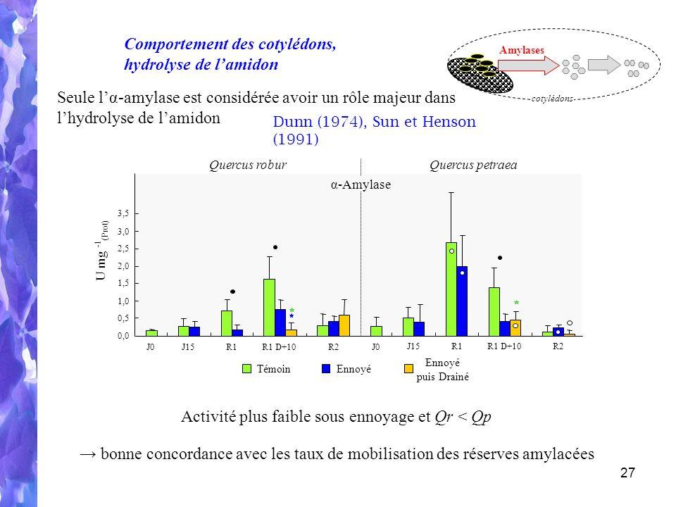 27 Seule lα-amylase est considérée avoir un rôle majeur dans lhydrolyse de lamidon Dunn (1974), Sun et Henson (1991) Amylases cotylédons Comportement des cotylédons, hydrolyse de lamidon Quercus roburQuercus petraea α-Amylase J15R1R1 D+10R2 J15R1R1 D+10R2 J0 U mg - 1 (Prot) 0,0 0,5 1,0 1,5 2,0 2,5 3,0 3,5 TémoinEnnoyé puis Drainé Activité plus faible sous ennoyage et Qr < Qp bonne concordance avec les taux de mobilisation des réserves amylacées