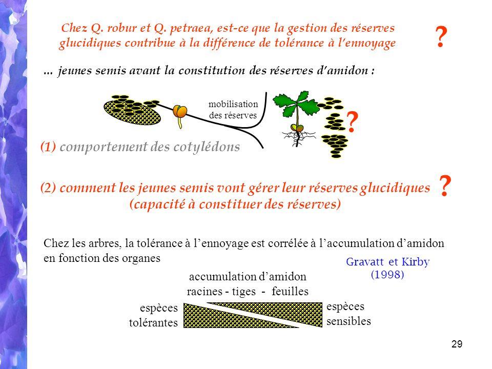 29 … jeunes semis avant la constitution des réserves damidon : (1) comportement des cotylédons Chez Q.