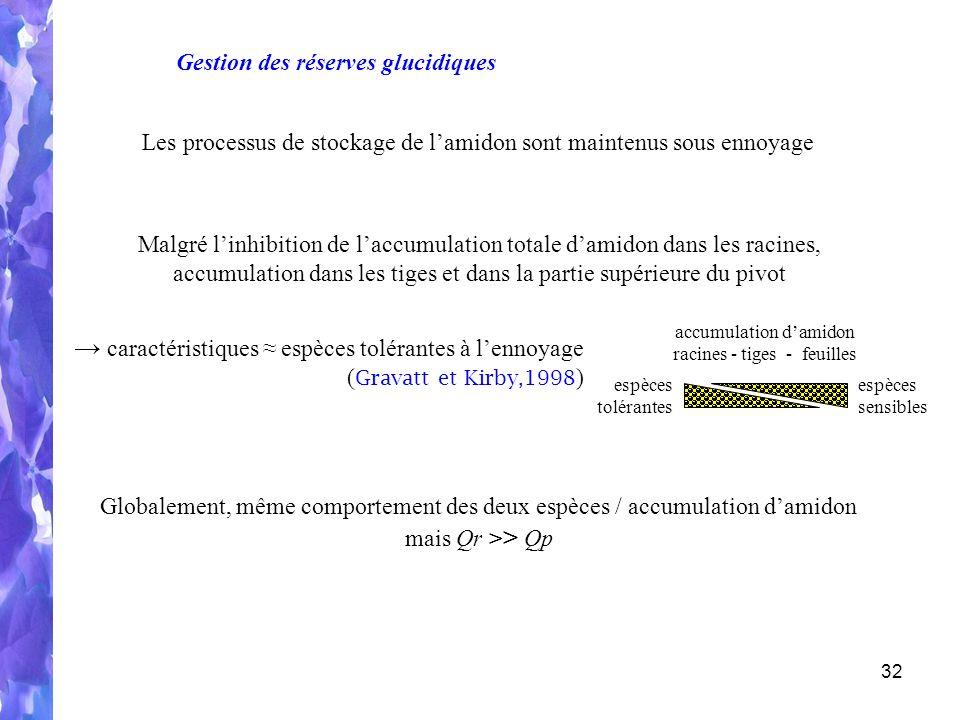 32 accumulation damidon racines - tiges - feuilles espèces tolérantes espèces sensibles Malgré linhibition de laccumulation totale damidon dans les racines, accumulation dans les tiges et dans la partie supérieure du pivot Les processus de stockage de lamidon sont maintenus sous ennoyage Globalement, même comportement des deux espèces / accumulation damidon mais Qr > > Qp caractéristiques espèces tolérantes à lennoyage ( Gravatt et Kirby,1998 ) Gestion des réserves glucidiques