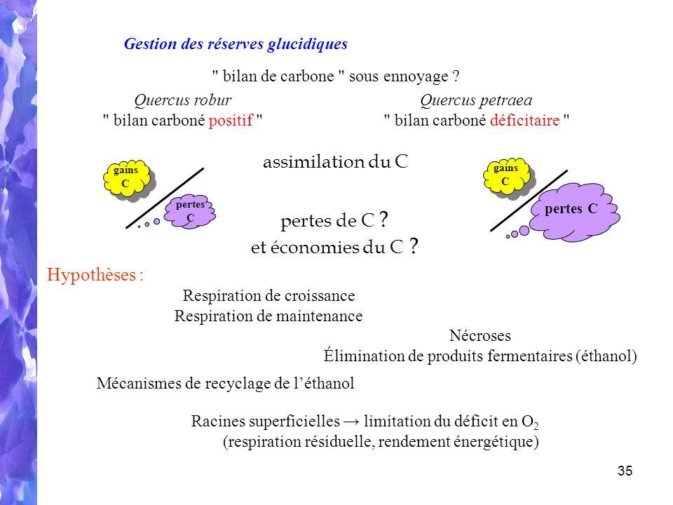 35 Respiration de croissance Respiration de maintenance gains C pertes C assimilation du C pertes C gains C Gestion des réserves glucidiques bilan de carbone sous ennoyage .