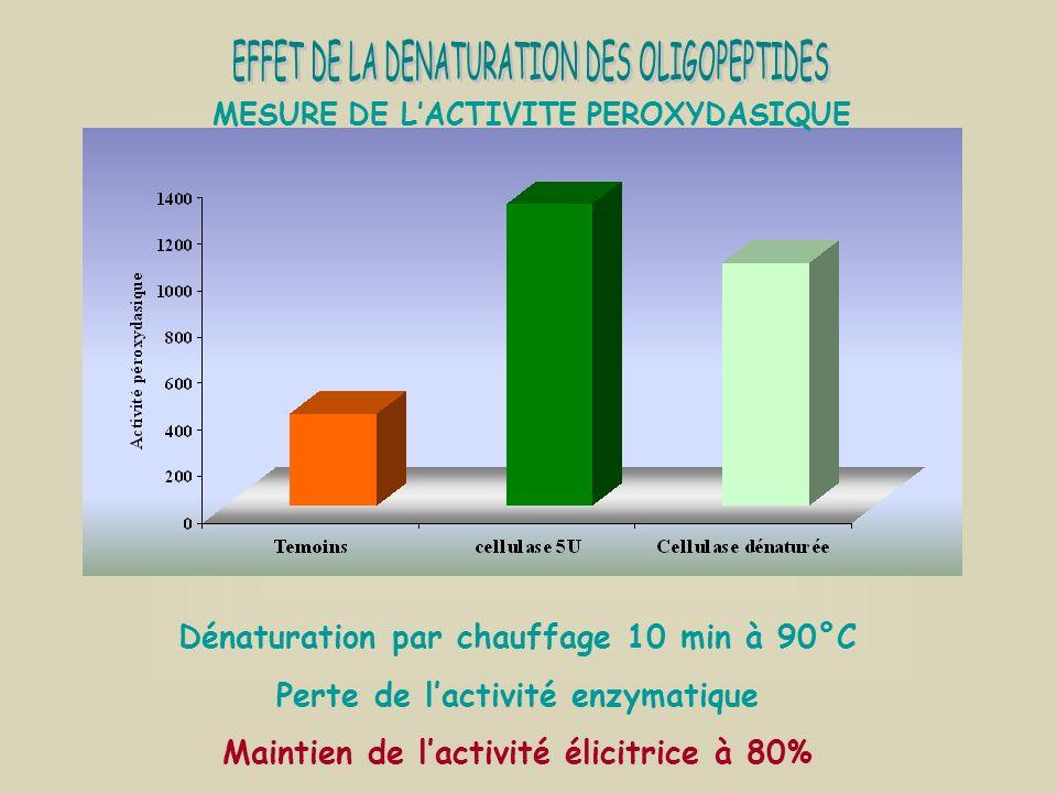 Dénaturation par chauffage 10 min à 90°C Perte de lactivité enzymatique Maintien de lactivité élicitrice à 80% MESURE DE LACTIVITE PEROXYDASIQUE