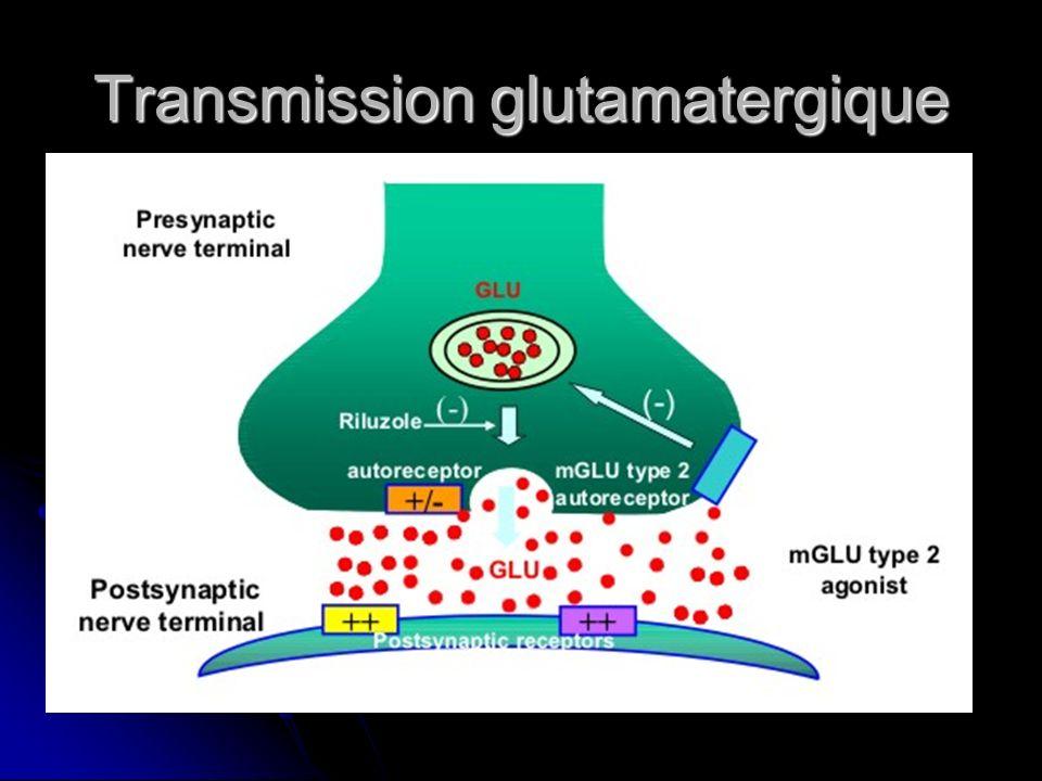Transmission glutamatergique
