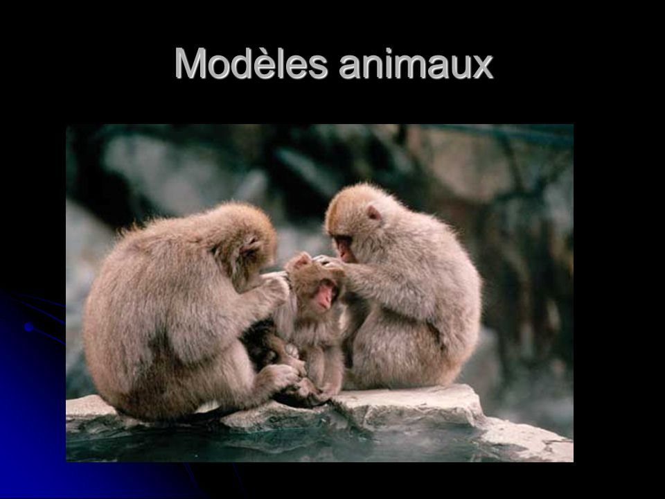 Modèles animaux