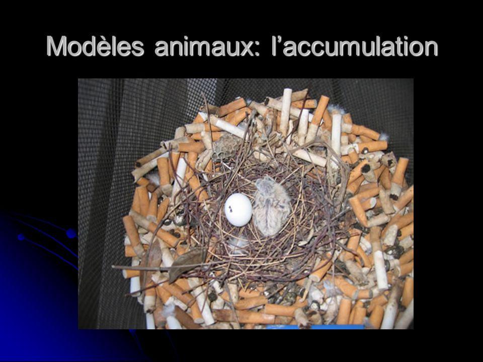 Modèles animaux: laccumulation