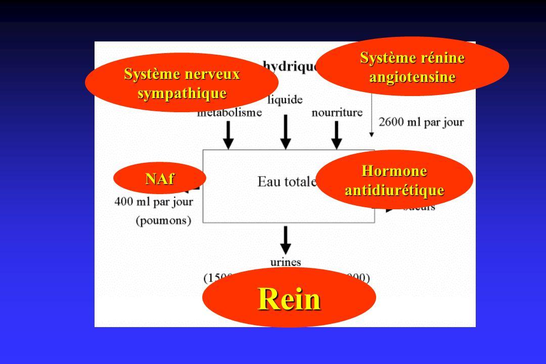 Rein Système nerveux sympathique Système rénine angiotensine NAf Hormone antidiurétique