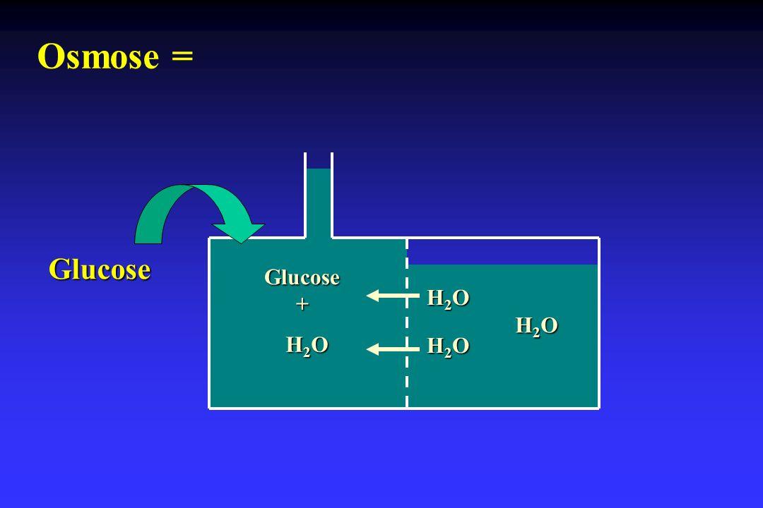 H2OH2OH2OH2O H2OH2OH2OH2O H2OH2OH2OH2O H2OH2OH2OH2O Glucose+ Glucose Osmose =