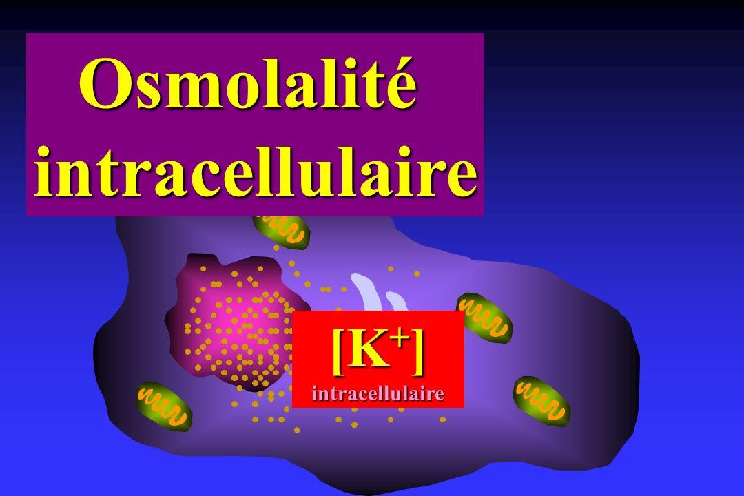 [K + ] intracellulaire Osmolalitéintracellulaire