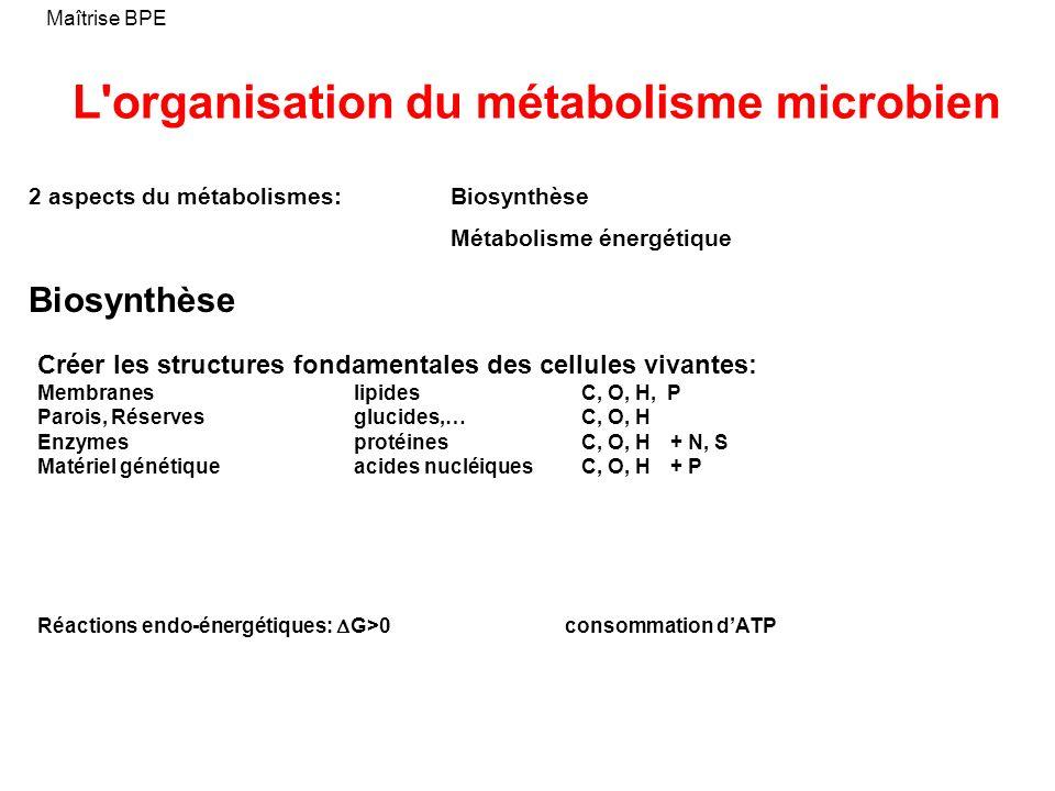 L'organisation du métabolisme microbien Maîtrise BPE Biosynthèse Créer les structures fondamentales des cellules vivantes: Membraneslipides C, O, H, P