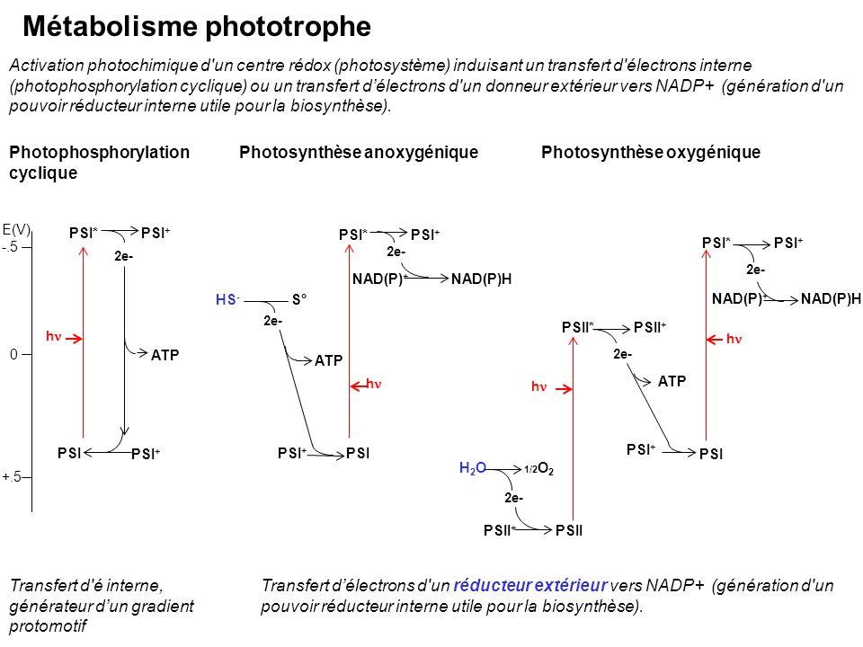 PSI* h PSI + 2e- PSI ATP PSI*PSI + 2e- PSI + PSIPSI + HS - NAD(P)HNAD(P) + ATP S° 2e- h H2OH2O h 1/2 O 2 2e- PSII PSII*PSII + 2e- PSI*PSI + 2e- PSII +