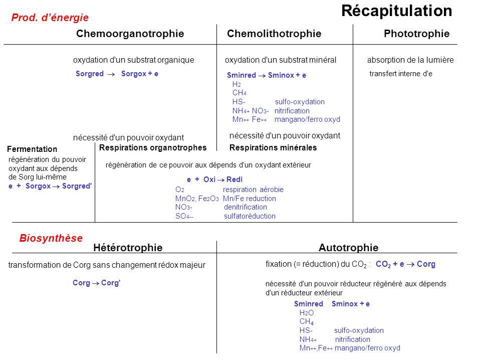 ChemoorganotrophieChemolithotrophiePhototrophie oxydation d'un substrat organiqueoxydation d'un substrat minéralabsorption de la lumière Sorgred Sorgo