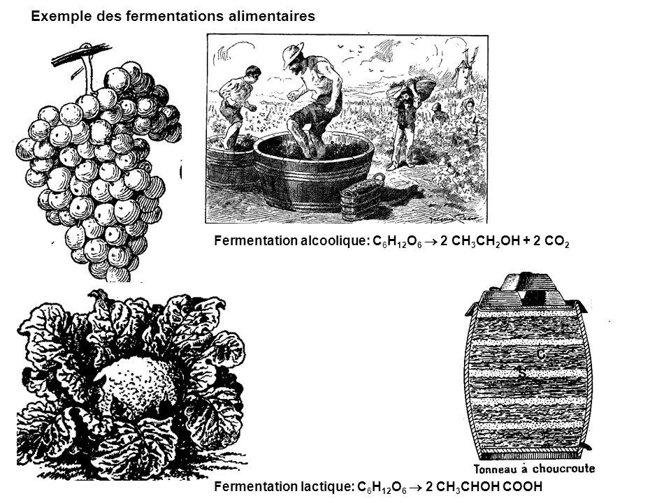 Exemple des fermentations alimentaires Fermentation alcoolique: C 6 H 12 O 6 2 CH 3 CH 2 OH + 2 CO 2 Fermentation lactique: C 6 H 12 O 6 2 CH 3 CHOH C
