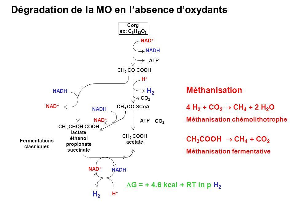 Corg ex: C 6 H 12 O 6 CH 3 CO COOH ATP NAD + CH 3 CO SCoA CO 2 CH 3 CHOH COOH lactate éthanol propionate succinate CO 2 NAD + NADH NAD + Fermentations