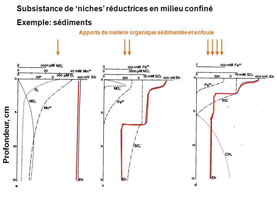 Subsistance de niches réductrices en milieu confiné Exemple: sédiments Apports de matière organique sédimentée et enfouie Profondeur, cm