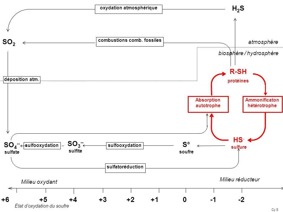 HS - sulfure +6 +5 +4 +3 +2 +1 0 -1 -2 R-SH protéines Ammonificaton hétérotrophe Absorption autotrophe Milieu réducteur Milieu oxydant atmosphère bios