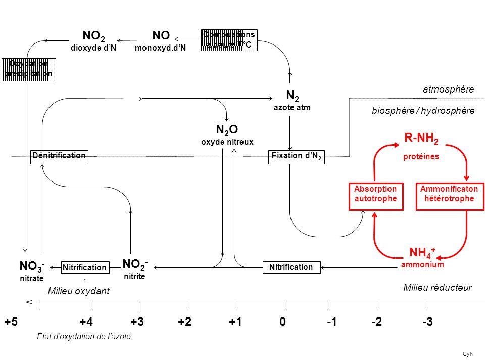 NH 4 + ammonium +5 +4 +3 +2 +1 0 -1 -2 -3 R-NH 2 protéines Ammonificaton hétérotrophe Absorption autotrophe Milieu réducteur Milieu oxydant N 2 azote