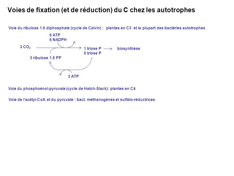3 CO 2 3 ribulose 1.5 PP 6 ATP 6 NADPH 1 triose P 5 triose P biosynthèse 3 ATP Voie du ribulose 1.5 diphosphate (cycle de Calvin) : plantes en C3 et l