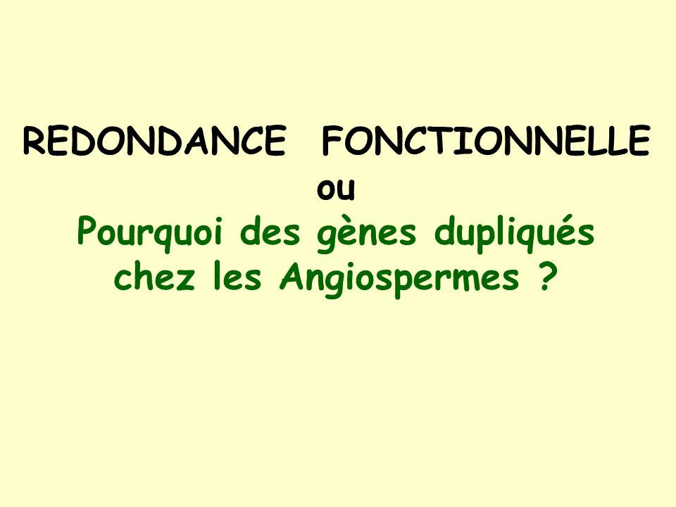 REDONDANCE FONCTIONNELLE ou Pourquoi des gènes dupliqués chez les Angiospermes ?