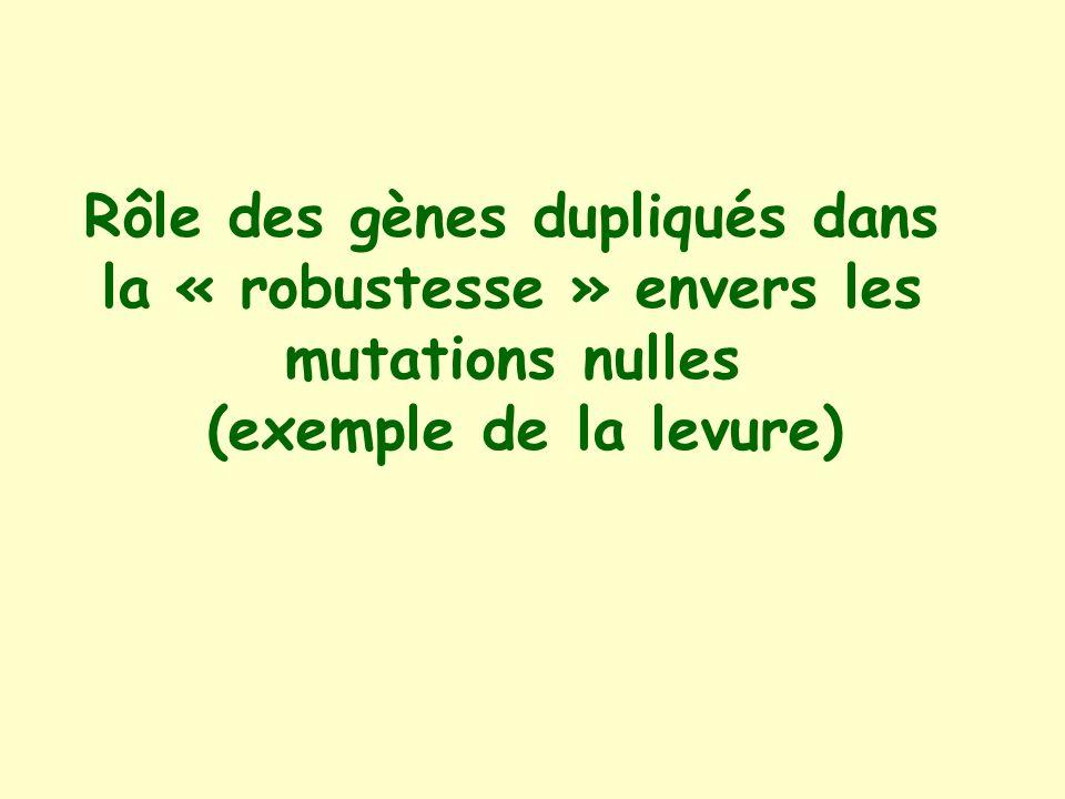 Rôle des gènes dupliqués dans la « robustesse » envers les mutations nulles (exemple de la levure)