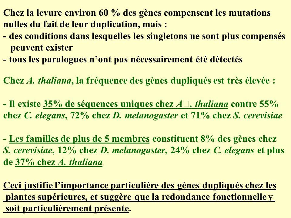 Chez la levure environ 60 % des gènes compensent les mutations nulles du fait de leur duplication, mais : - des conditions dans lesquelles les singletons ne sont plus compensés peuvent exister - tous les paralogues nont pas nécessairement été détectés Chez A.