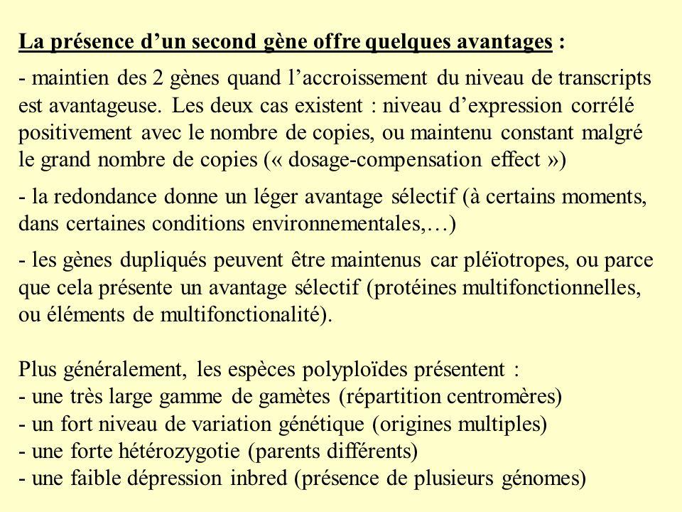 La présence dun second gène offre quelques avantages : - maintien des 2 gènes quand laccroissement du niveau de transcripts est avantageuse.