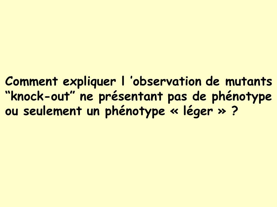 Comment expliquer l observation de mutants knock-out ne présentant pas de phénotype ou seulement un phénotype « léger » ?