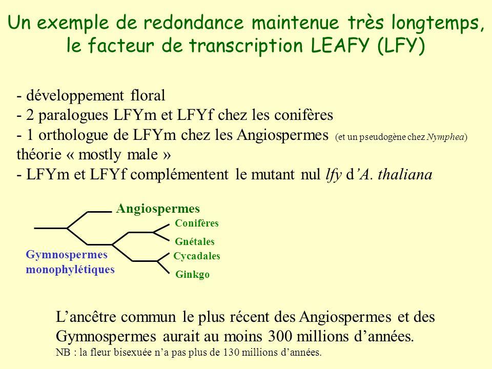 Un exemple de redondance maintenue très longtemps, le facteur de transcription LEAFY (LFY) - développement floral - 2 paralogues LFYm et LFYf chez les conifères - 1 orthologue de LFYm chez les Angiospermes (et un pseudogène chez Nymphea) théorie « mostly male » - LFYm et LFYf complémentent le mutant nul lfy dA.