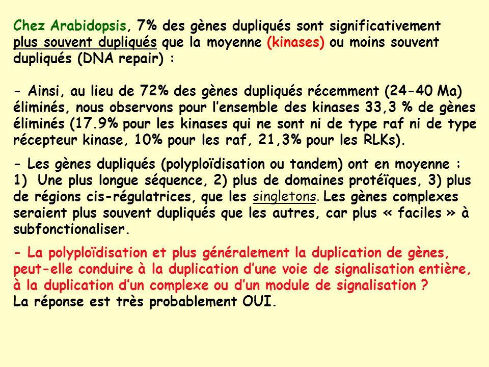 Chez Arabidopsis, 7% des gènes dupliqués sont significativement plus souvent dupliqués que la moyenne (kinases) ou moins souvent dupliqués (DNA repair) : - Ainsi, au lieu de 72% des gènes dupliqués récemment (24-40 Ma) éliminés, nous observons pour lensemble des kinases 33,3 % de gènes éliminés (17.9% pour les kinases qui ne sont ni de type raf ni de type récepteur kinase, 10% pour les raf, 21,3% pour les RLKs).