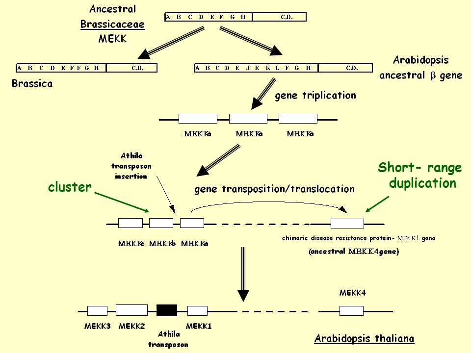 cluster Short- range duplication