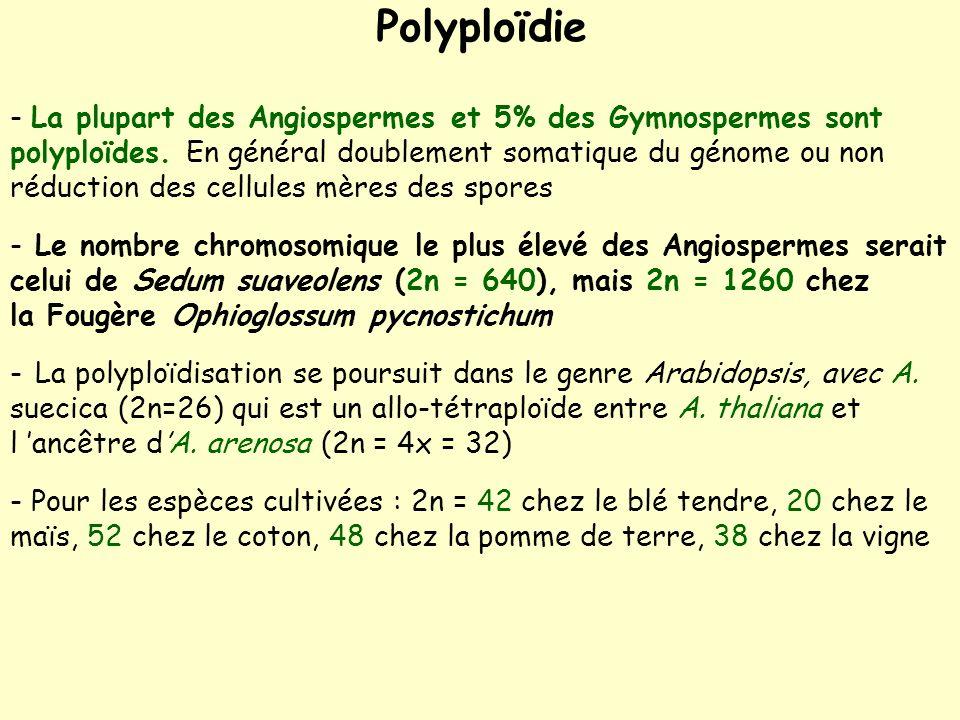 Polyploïdie - La plupart des Angiospermes et 5% des Gymnospermes sont polyploïdes.