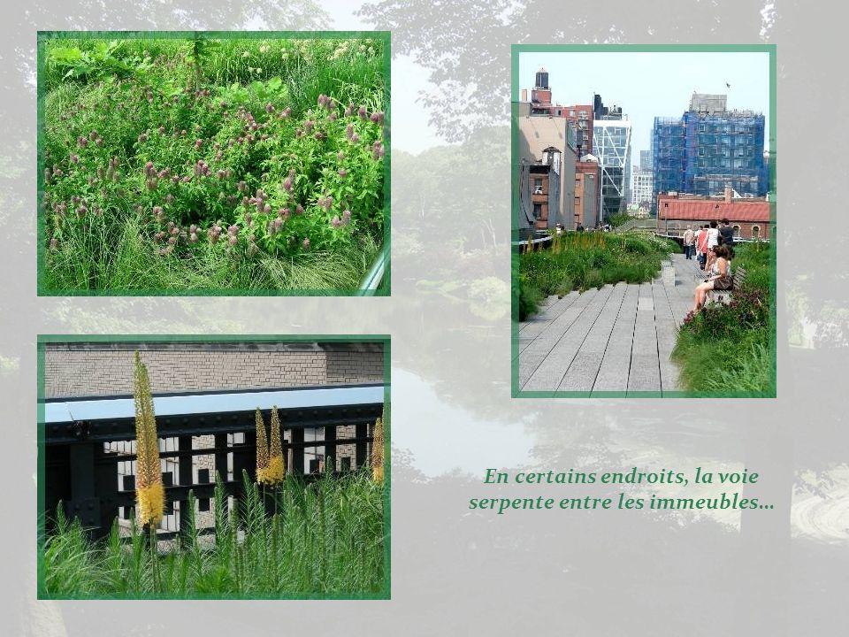 Toutes les plantes utilisées sont de nature vivace et très rustique.