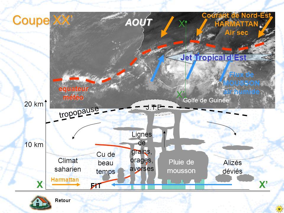 equateur météo Flux de MOUSSON air humide Jet Tropical dEst AOUT Golfe de Guinée X X Coupe XX Retour J.T.E. Climat saharien Cu de beau temps Lignes de
