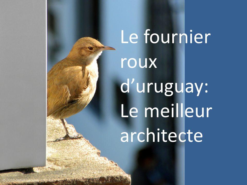 Le fournier roux duruguay: Le meilleur architecte