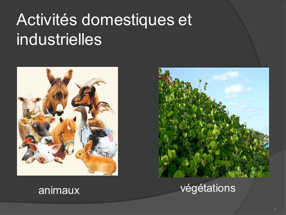 6 animaux végétations