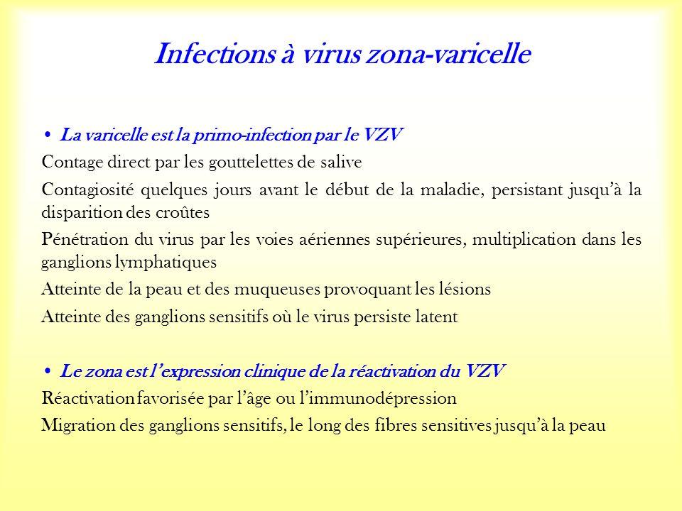 Infections à virus zona-varicelle La varicelle est la primo-infection par le VZV Contage direct par les gouttelettes de salive Contagiosité quelques jours avant le début de la maladie, persistant jusquà la disparition des croûtes Pénétration du virus par les voies aériennes supérieures, multiplication dans les ganglions lymphatiques Atteinte de la peau et des muqueuses provoquant les lésions Atteinte des ganglions sensitifs où le virus persiste latent Le zona est lexpression clinique de la réactivation du VZV Réactivation favorisée par lâge ou limmunodépression Migration des ganglions sensitifs, le long des fibres sensitives jusquà la peau
