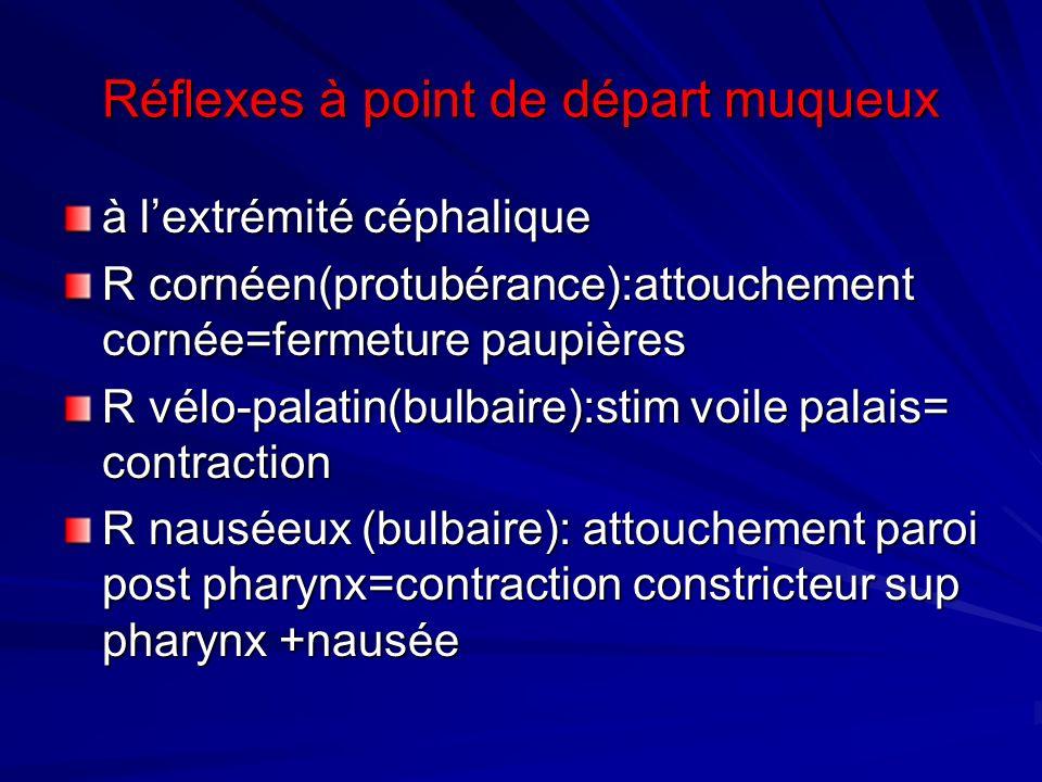 Réflexes à point de départ muqueux à lextrémité céphalique R cornéen(protubérance):attouchement cornée=fermeture paupières R vélo-palatin(bulbaire):st