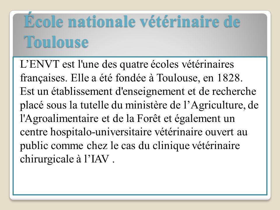 École nationale vétérinaire de Toulouse École nationale vétérinaire de Toulouse LENVT est l'une des quatre écoles vétérinaires françaises. Elle a été