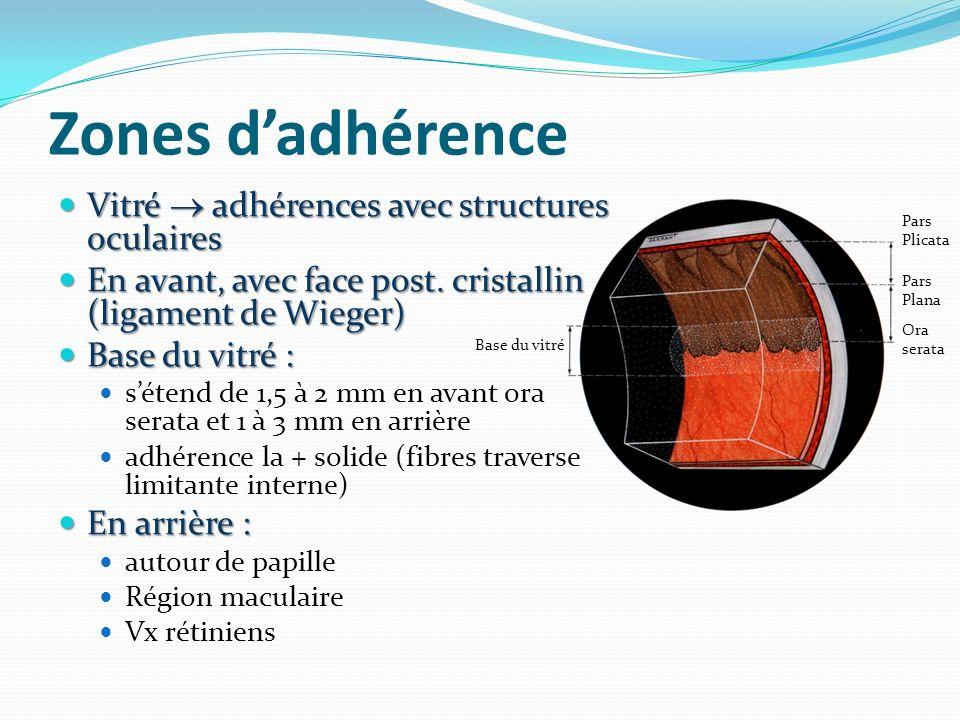 Zones dadhérence Vitré adhérences avec structures oculaires Vitré adhérences avec structures oculaires En avant, avec face post. cristallin (ligament