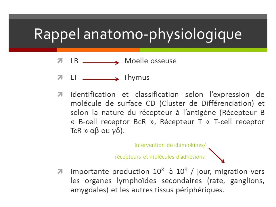 Rappel anatomo-physiologique LB Moelle osseuse LT Thymus Identification et classification selon lexpression de molécule de surface CD (Cluster de Diff