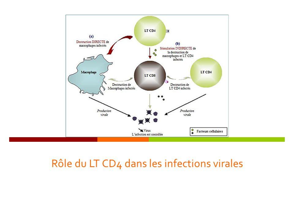 Rôle du LT CD4 dans les infections virales