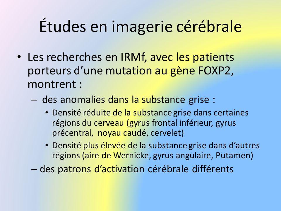 Études en imagerie cérébrale Les recherches en IRMf, avec les patients porteurs dune mutation au gène FOXP2, montrent : – des anomalies dans la substa