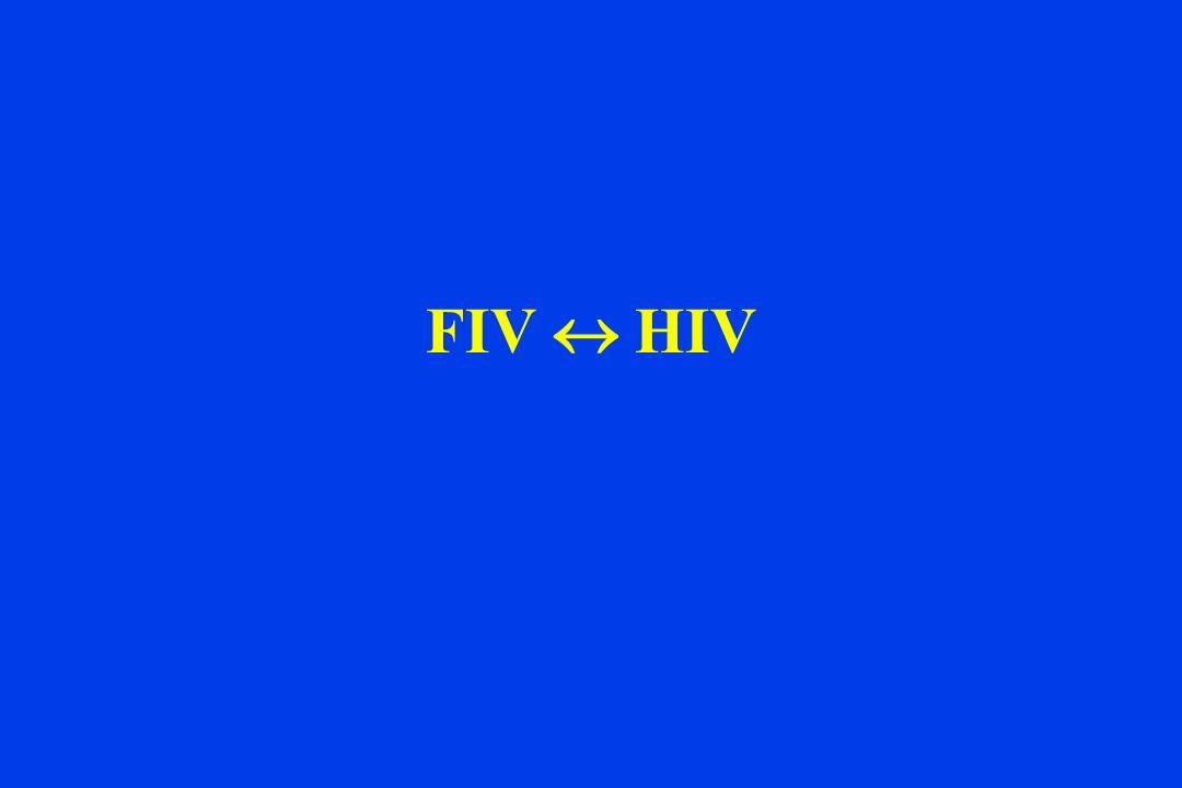 FIV HIV