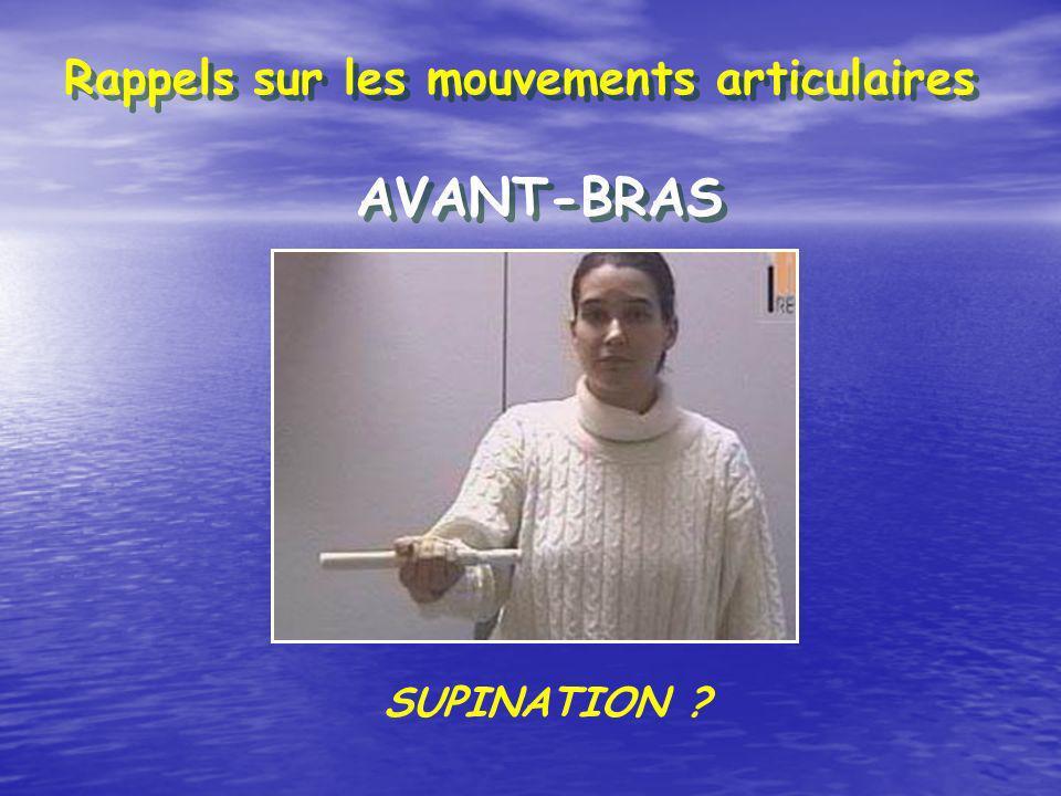 Rappels sur les mouvements articulaires AVANT-BRAS SUPINATION ?