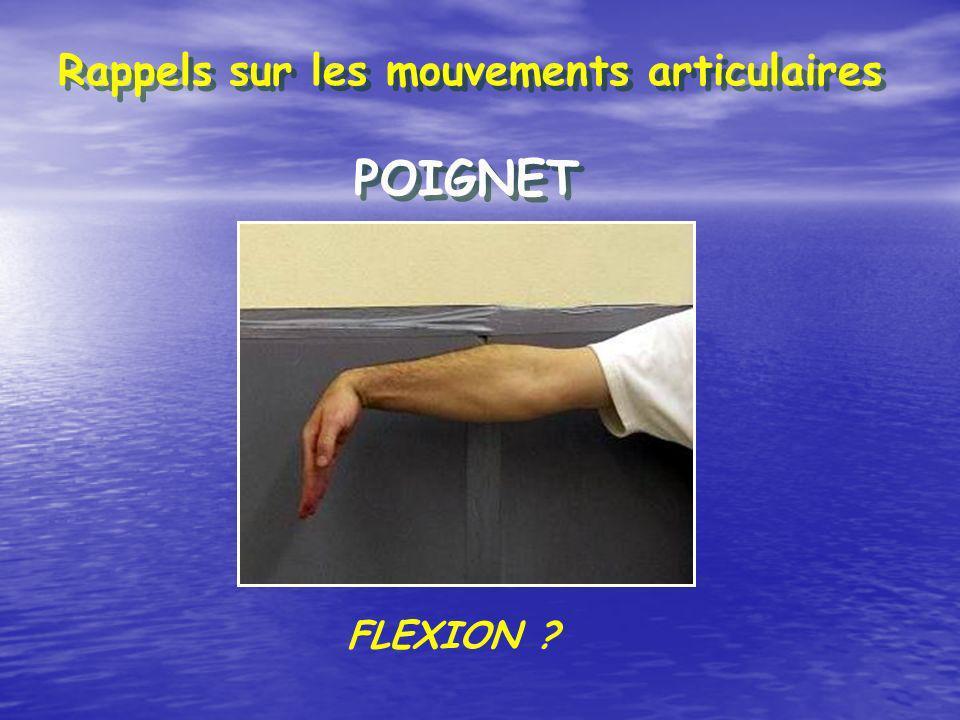 Rappels sur les mouvements articulaires POIGNET FLEXION ?