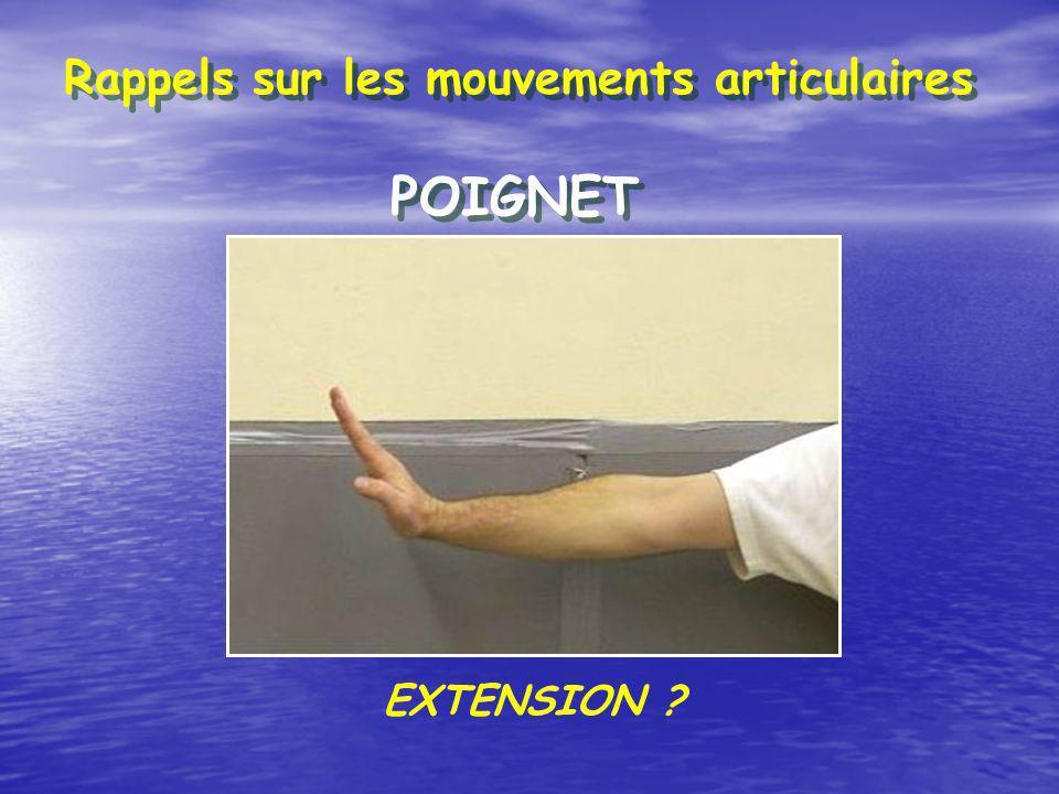 Rappels sur les mouvements articulaires POIGNET EXTENSION ?