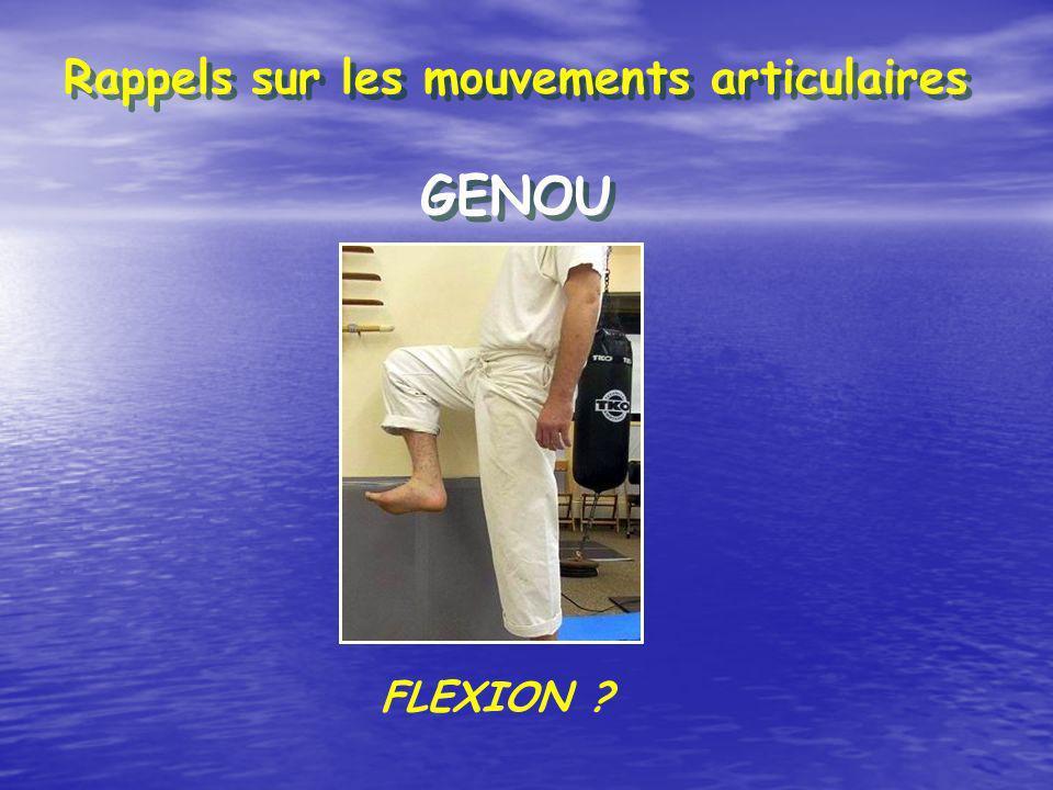 Rappels sur les mouvements articulaires GENOU FLEXION ?